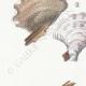 DÉTAILS 02 | Mycologie - Champignon - Hexagona Pl.162