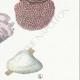 DÉTAILS 05 | Mycologie - Champignon - Hexagona Pl.162