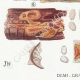 DETAILS 03 | Mycology - Mushroom - Physisporus Pl.163