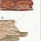 DETAILS 05 | Mycology - Mushroom - Physisporus Pl.163