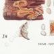 DETAILS 07 | Mycology - Mushroom - Physisporus Pl.163