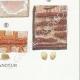 DETAILS 08 | Mycology - Mushroom - Physisporus Pl.163