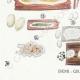 DETAILS 03 | Mycology - Mushroom - Physisporus Pl.165