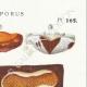 DETAILS 04 | Mycology - Mushroom - Physisporus Pl.165