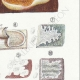 DETAILS 05 | Mycology - Mushroom - Physisporus Pl.165