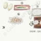 DETAILS 07 | Mycology - Mushroom - Physisporus Pl.165