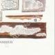 DETAILS 08 | Mycology - Mushroom - Physisporus Pl.165