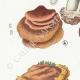 DETAILS 02 | Mycology - Mushroom - Polyporus Pl.167