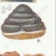 DETAILS 05 | Mycology - Mushroom - Polyporus Pl.168
