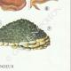 DETAILS 06 | Mycology - Mushroom - Polyporus Pl.168