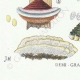 DETAILS 07 | Mycology - Mushroom - Polyporus Pl.168