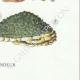 DETAILS 08 | Mycology - Mushroom - Polyporus Pl.168