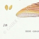 DETAILS 07 | Mycology - Mushroom - Polyporus Pl.169bis