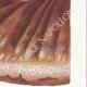 DÉTAILS 05 | Mycologie - Champignon - Polyporus Pl.170