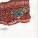 DÉTAILS 08 | Mycologie - Champignon - Polyporus Pl.170