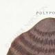 DÉTAILS 01   Mycologie - Champignon - Polyporus Pl.171