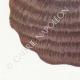 DÉTAILS 02   Mycologie - Champignon - Polyporus Pl.171
