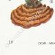 DÉTAILS 07   Mycologie - Champignon - Polyporus Pl.171