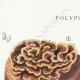 DETAILS 01 | Mycology - Mushroom - Polyporus Pl.172