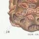 DETAILS 07 | Mycology - Mushroom - Polyporus Pl.173
