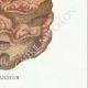 DETAILS 08 | Mycology - Mushroom - Polyporus Pl.173