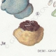 DETAILS 03 | Mycology - Mushroom - Polyporus Pl.174
