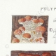 DETAILS 01 | Mycology - Mushroom - Polyporus Pl.175