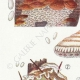 DETAILS 02 | Mycology - Mushroom - Polyporus Pl.175