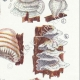 DETAILS 05 | Mycology - Mushroom - Polyporus Pl.175