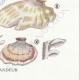 DETAILS 06 | Mycology - Mushroom - Polyporus Pl.175