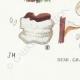 DETAILS 07 | Mycology - Mushroom - Polyporus Pl.175