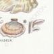 DETAILS 08 | Mycology - Mushroom - Polyporus Pl.175