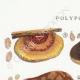 DETAILS 01 | Mycology - Mushroom - Polyporus Pl.177