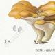 DETAILS 03   Mycology - Mushroom - Polyporus Pl.178