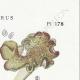 DETAILS 04   Mycology - Mushroom - Polyporus Pl.178
