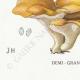 DETAILS 07   Mycology - Mushroom - Polyporus Pl.178