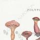 DÉTAILS 01 | Mycologie - Champignon - Polyporus Pl.180