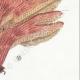 DÉTAILS 06 | Mycologie - Champignon - Polyporus Pl.180