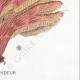 DÉTAILS 08 | Mycologie - Champignon - Polyporus Pl.180