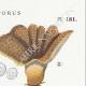 DÉTAILS 04 | Mycologie - Champignon - Polyporus Pl.181