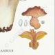 DÉTAILS 06 | Mycologie - Champignon - Polyporus Pl.181