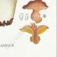 DÉTAILS 08 | Mycologie - Champignon - Polyporus Pl.181