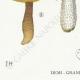 DÉTAILS 03 | Mycologie - Champignon - Boletus Pl.185