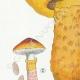DETAILS 02 | Mycology - Mushroom - Boletus Pl.186