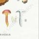 DETAILS 06 | Mycology - Mushroom - Boletus Pl.186