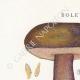 DETAILS 01 | Mycology - Mushroom - Boletus Pl.187