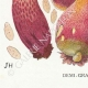 DETAILS 03 | Mycology - Mushroom - Boletus Pl.187