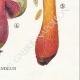 DETAILS 06 | Mycology - Mushroom - Boletus Pl.187