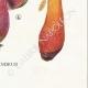 DETAILS 08 | Mycology - Mushroom - Boletus Pl.187