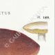 DETAILS 04 | Mycology - Mushroom - Boletus Pl.189